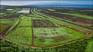 Monsanto Fined $10 Million For Using Banned Pesticide On Maui