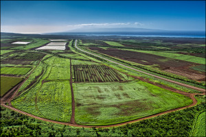 Hawaii to Expand Voluntary Pesticide Reporting by Big Ag Companies