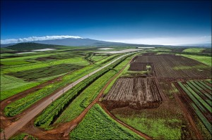 Monsanto and Dow to Challenge Maui County GMO Farming Ban