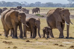 We Must Act Now To Save Endangered Wildlife