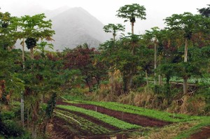 Is Updating Hawaii's Outdated Farmland Ratings Worth the Cost?