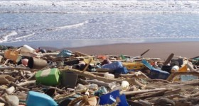 Beach Cleanups Prove Popular And Purposeful During Pandemic