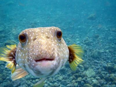 Hawaii Island Couple In 'Bizarre' Aquarium Fishing Incident Fined More Than $270,000