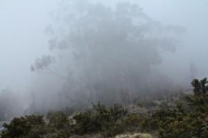 Hawaii Land Blog — Environment, Energy and Sustainability  — Mar. 12-18