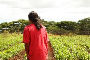 Hawaii Prison Farms Grow Their Own Produce