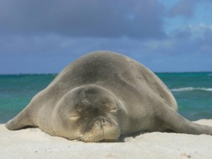 Fishermen Oppose Extra Protections for Hawaiian Monk Seals