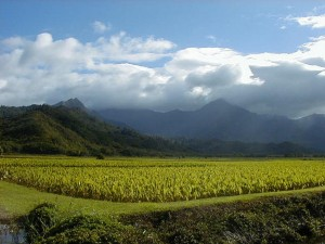 Hawaii Legislature Mulls Solar Power and Child Care on Agricultural Land