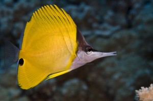 Thousands Testify on Bills to Restrict Aquarium Fishing in Hawaii