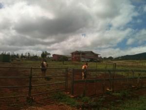 Federal Definition Of 'Farm' Sheds Light On Honolulu Debate