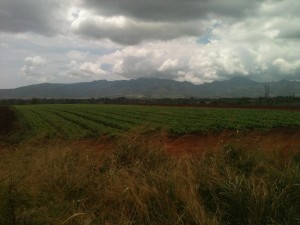 Hawaii Takes Ad Hoc Approach to Preserving Farmland