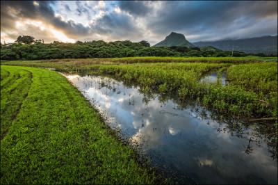 Trisha Kehaulani Watson: Restoring Hawaiian Cultural Rights At Kawainui Marsh