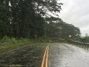 Iselle Pummels Big Island, Toppling Trees, Power Lines