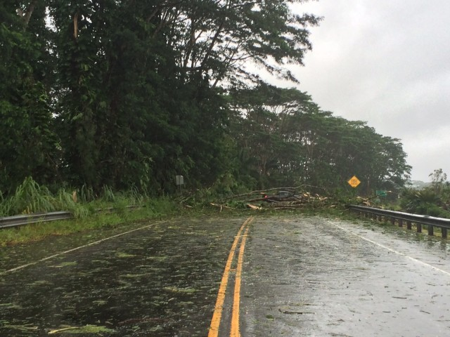 A tree pile in Puna on the Big Island caused by Tropical Storm Iselle