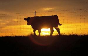 Senate Panel Kills Beef Bill
