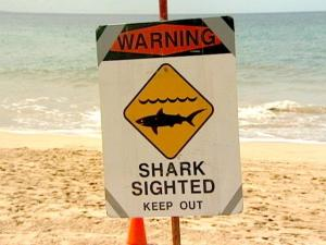 Shark Warning Signs Posted Near Bellows