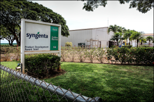 Kauai Groups Sue State, Syngenta To Stop GMO Farming On Public Land
