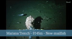 Scientists Discover World's Deepest Fish Near The Bottom Of The Mariana Trench
