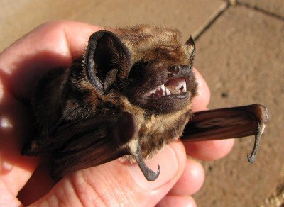 Wind Farms Want Permission To Kill More Bats — A Lot More