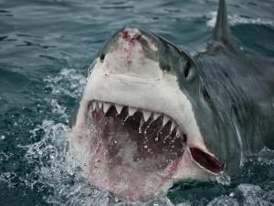 Hawaii Shark Attacks - Honolulu Civil Beat