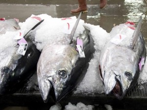 Hawaii's Longline Fishermen Pushing To Catch More Tuna