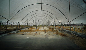 Richard Ha's Farm Ends Operations