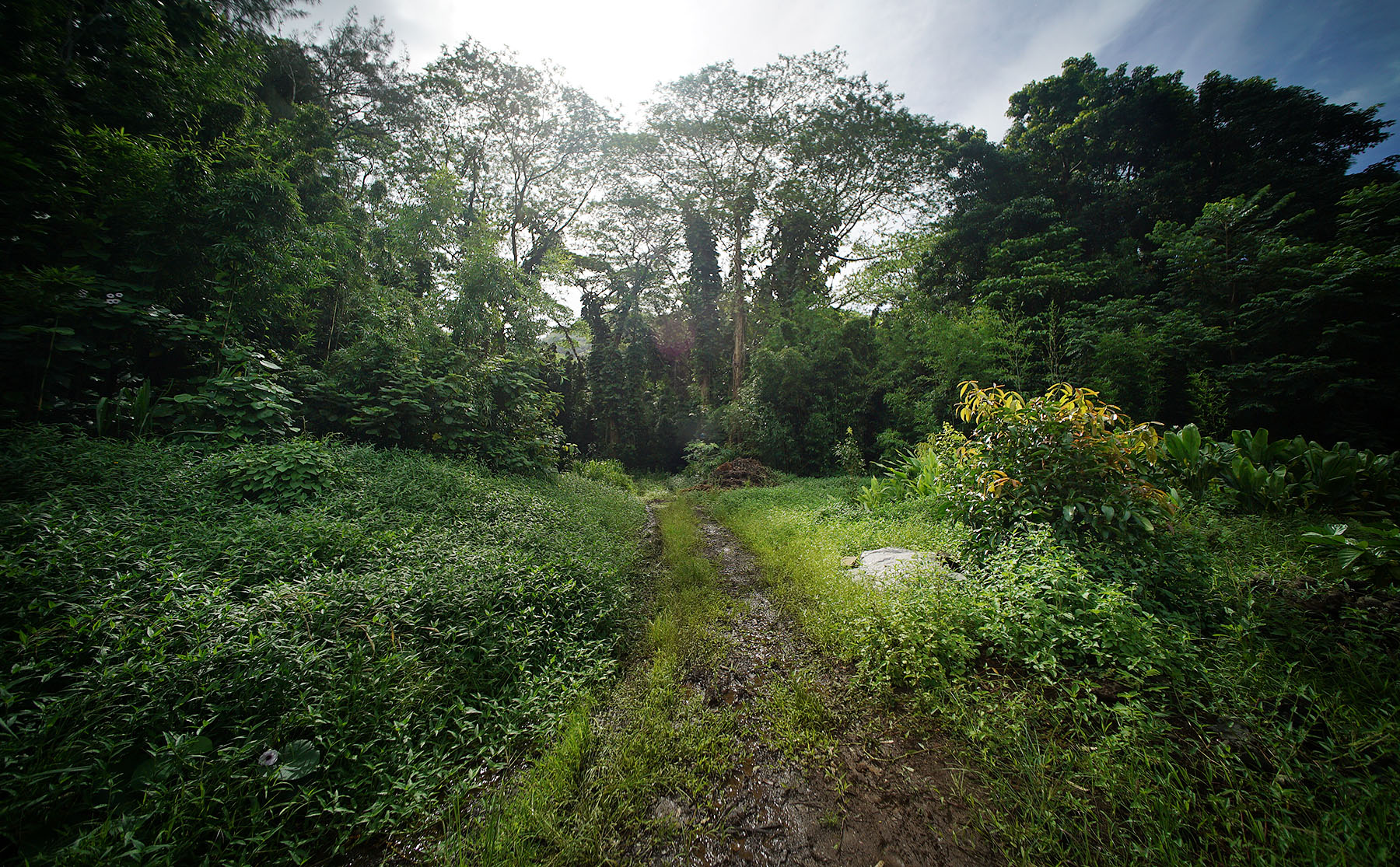 <p>Members of President Obama's Advisory Commission on Asian Americans and Pacific Islanders visited the Ho'oulu 'Aina Nature Park in Kalihi Valley on Wednesday. The park sits on more than 100 acres of land that was spared from development.</p>