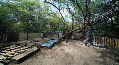 New residents to the Waiane Boat Harbor encampment set up a shipping pallet foundation and start pruning weak tree branches.