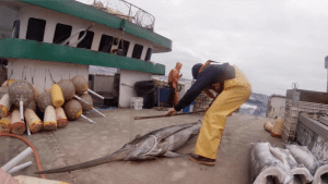 Measures Adopted To Protect Fishery Observers In Western, Central Pacific