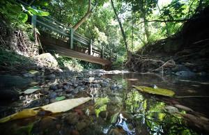 Curt Sanburn: A Walk Along Palolo Stream