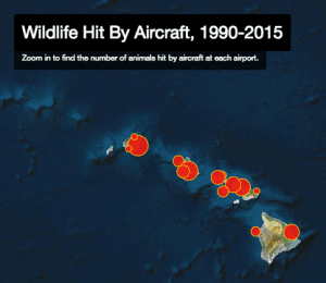 When Wildlife And Aircraft Collide in Hawaii