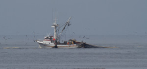 Coast Guard: Safety Requirements For Purse Seiners Are Lacking