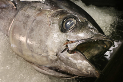 The Future For Fishing: Managing A Lucrative Resource In The Face Of Climate Change
