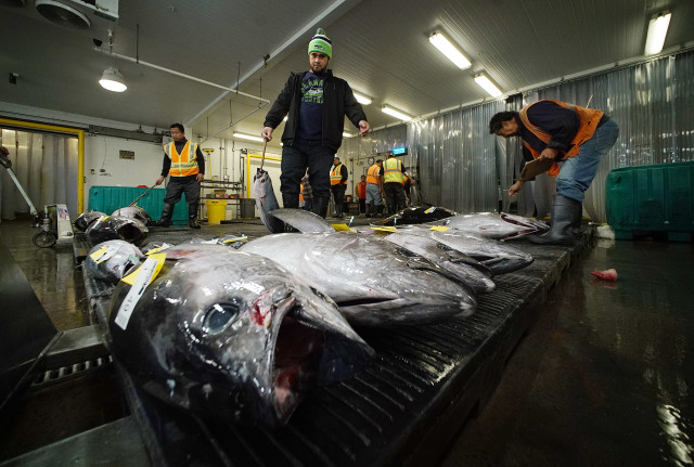 The Honolulu Fish Auction is serving as a choke point to help fight reports of alleged abuses of foreign crew members.