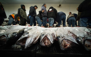 What Quota? Hawaii Longliners Are Fishing For Ahi Again