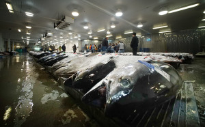More Tuna For Hawaii Fishing Boats In 2018