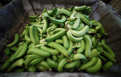 This Program Helped Big Island Farmers And Families. Now It's Out Of Cash