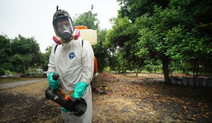 Hawaii's Cuts To Pest Control Have Allowed Dengue To Thrive