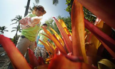 Hawaii Vector Control Branch Faces Budget Cuts (Again)
