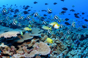 Hawaiians Press Obama To Expand NW Islands Marine Monument