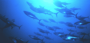 EPA Fines Tuna Processor In US Samoa
