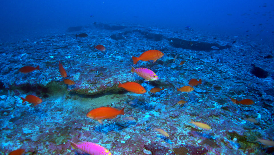 Papahanaumokuakea Marine National Monument
