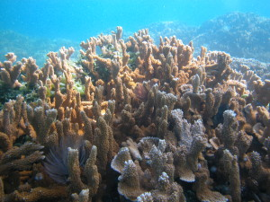 Expansion Of Marine Monument Protects Key Fisheries