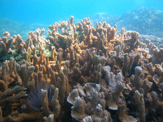 Coral reefs such as this one in the Papahanaumokuakea Marine National Monument provide places for fish to reproduce and sustain the vitality of their populations around Hawaii.