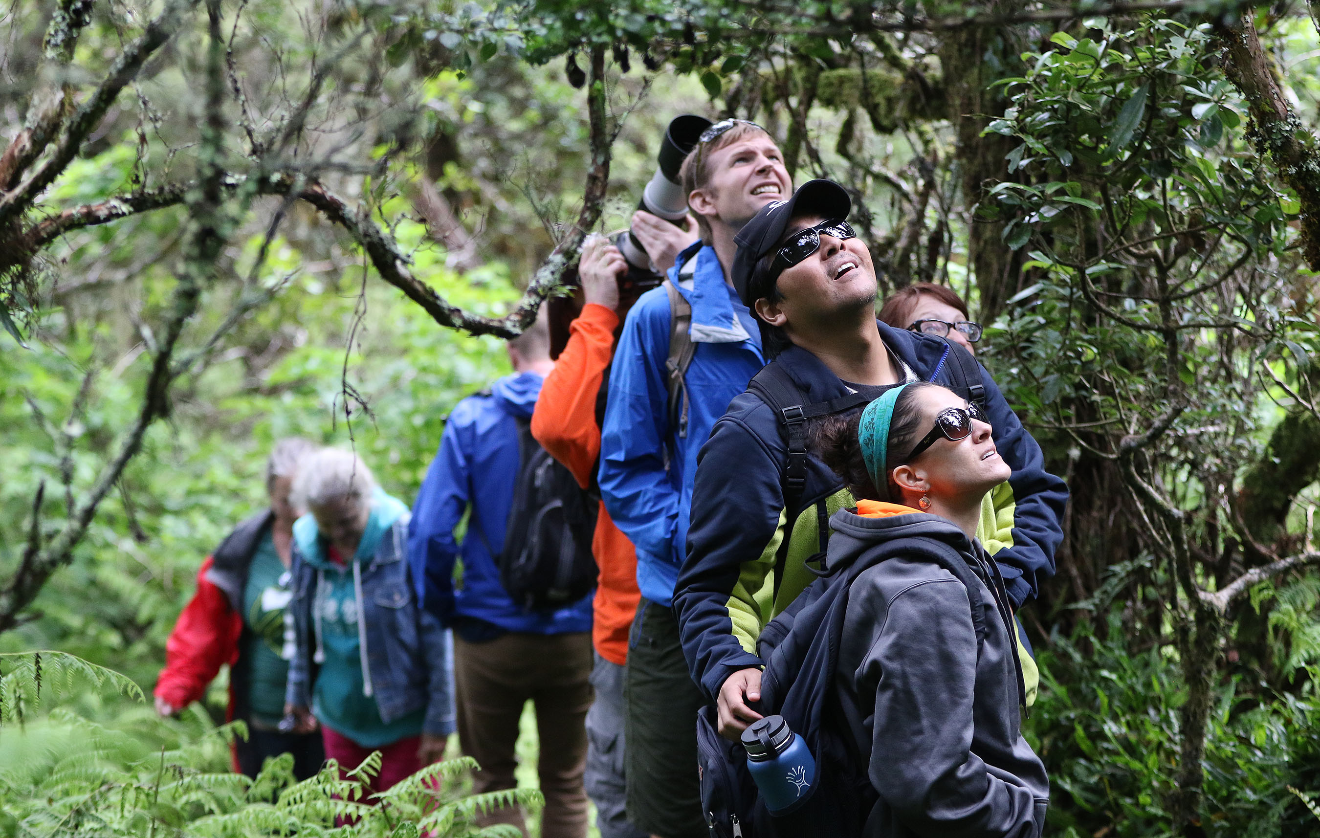 <p>Hikers stoppedto listen tobirds singing and rustling in a canopy of ohia lehua trees.</p>