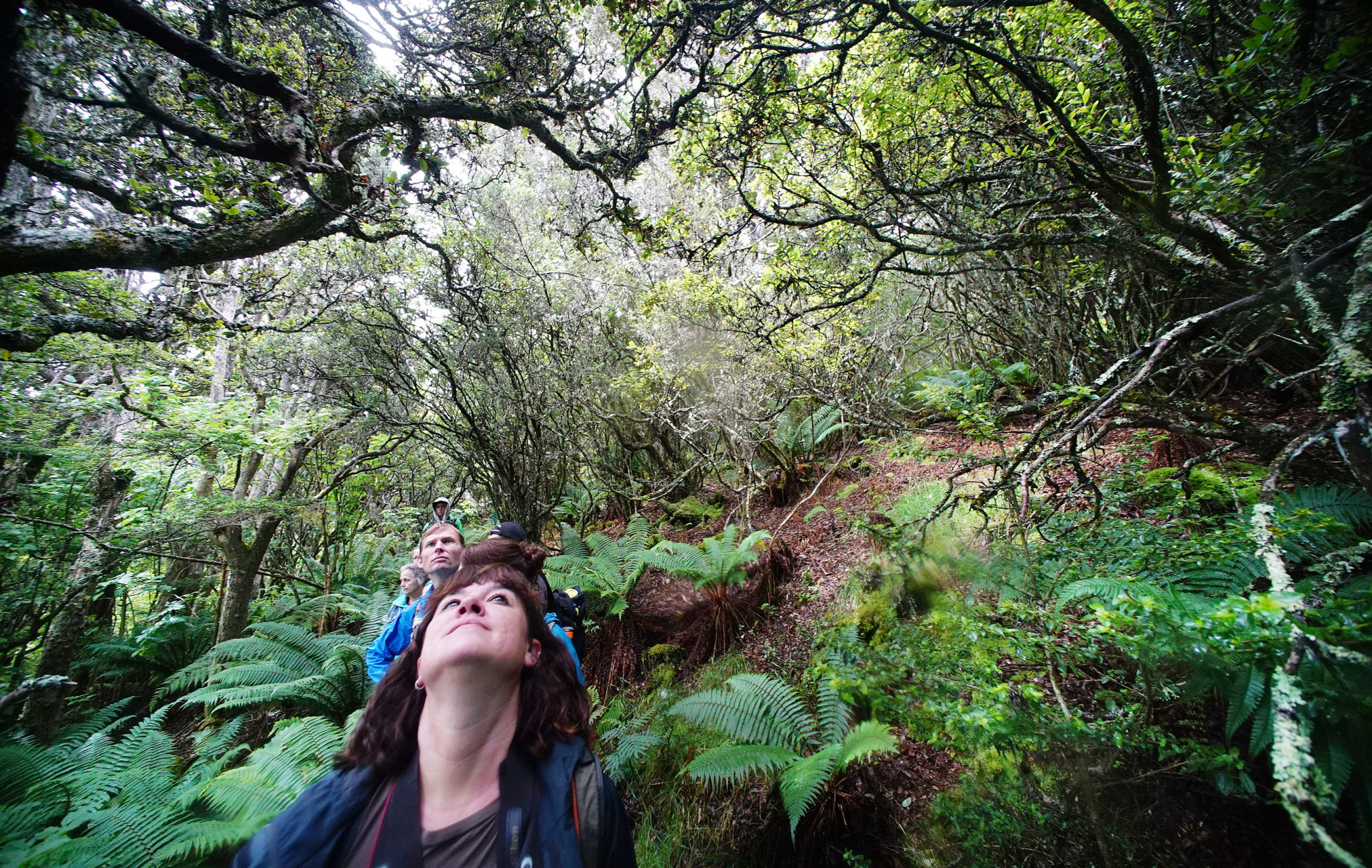 <p>The preserve is asanctuary for hundreds of native Hawaiian plants and animals. High-elevation rain forests and alpine shrublands are home to 12 native bird species, seven of them endangered.</p>