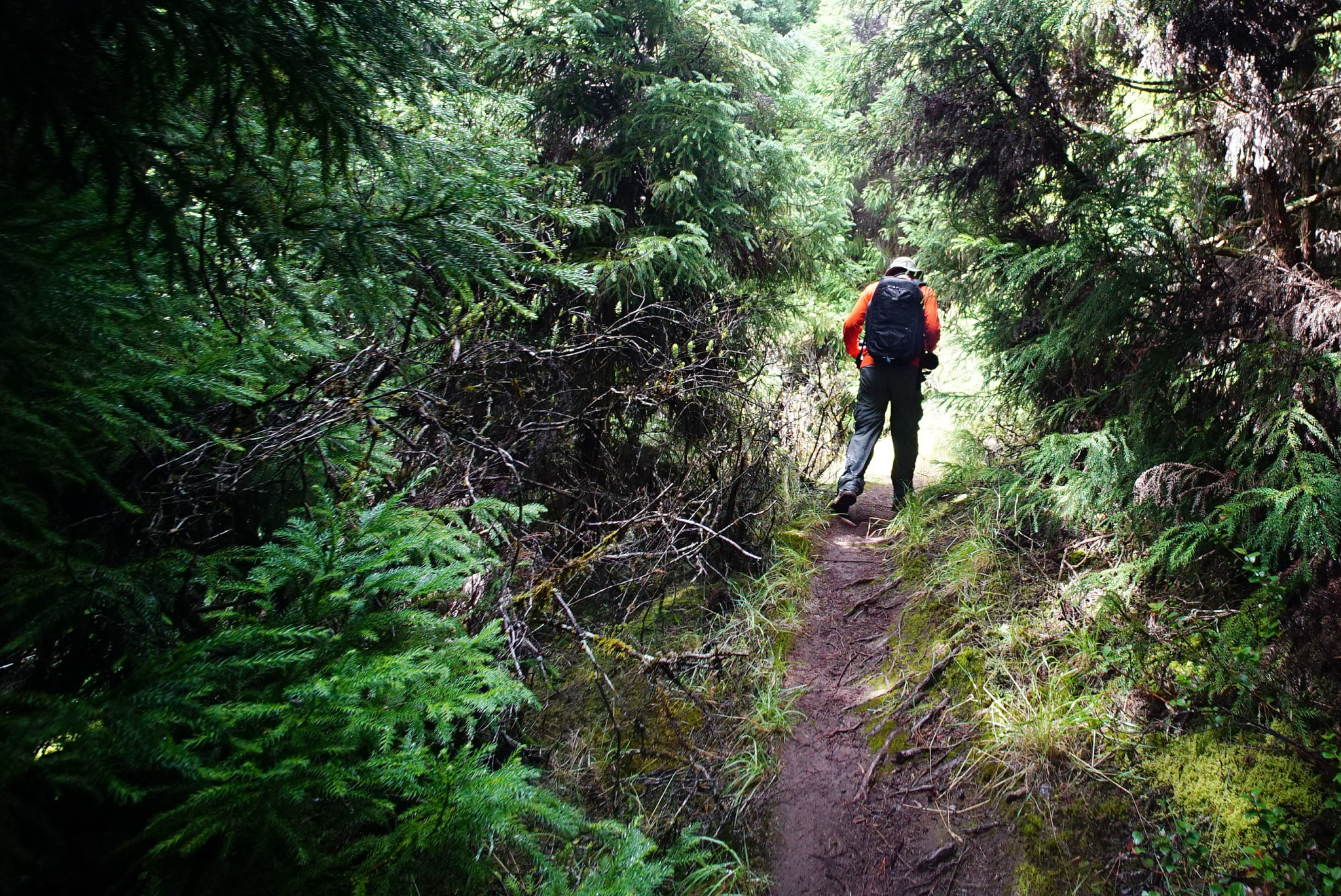 <p>Even at Waikamoi Preserve, hikers first walked among non-native evergreens that choke the floor of the watershed. The struggle is constant to protect native species by managing invasive plants and animals that threaten their survival.</p>