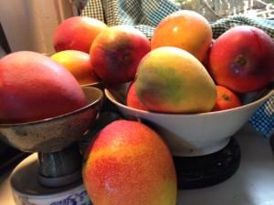 Trisha Kehaulani Watson: Mango-Picking Manners Stand For Much More