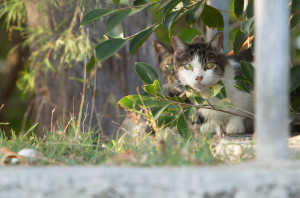 69 Percent Of Voters Want Feral Cats Removed From Hawaii