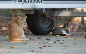 City Keeps Funding Feral Cat Approach That Legislature Rejected