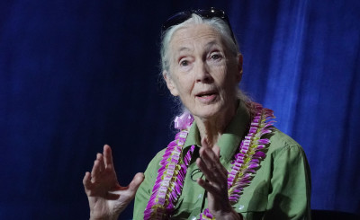 Jane Goodall Says Aloha